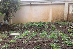 Manfaat Memiliki Taman Kecil di Depan Rumah Yang Semakin Menghilang