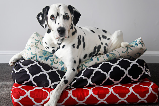 Dalmatian dog lying on top of a stack of homemade dog beds