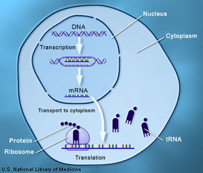 Discovery of a fundamental limit to the evolution of the genetic code