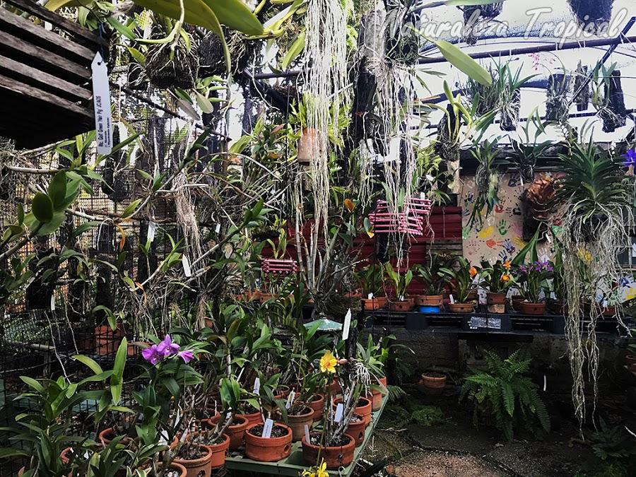 Colección de orquídeas en un pequeño jardín pero muy atractiva