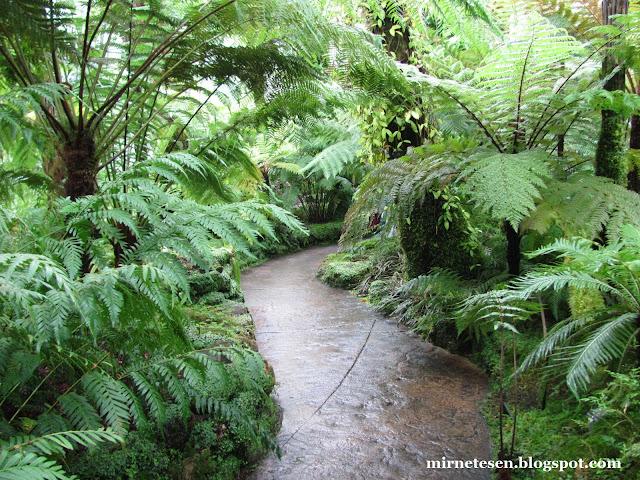 Ботанический сад в Эдинбурге - папоротники и хвощи