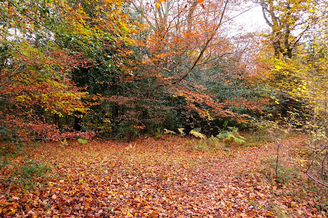Autumnal trees with leaves on the ground in shades of green, yellow orange and brown