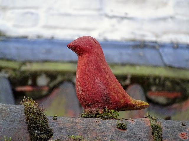 oiseaucourtraikortrijkbelgiquephotodumois