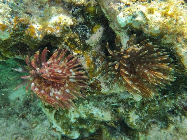 El arrecife de Cabañas Naranjo Chico en Guna Yala