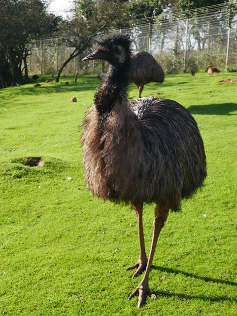 South Lakes Safari Zoo emu