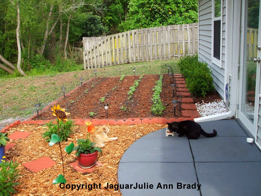 Sunflower Garden Four Rows of Seedlings AND Two Cats ~ JaguarJulie