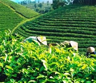 Cách bảo quản trà khô đơn giản, để trà ngon hơn