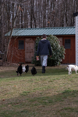 hens following owner with treats