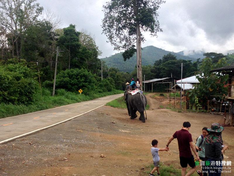 [泰國.清邁] 與大象共浴 溪上漂流 叢林飛越 包套行程一日遊