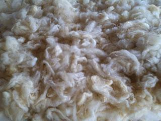 feltrando lã de ovelha