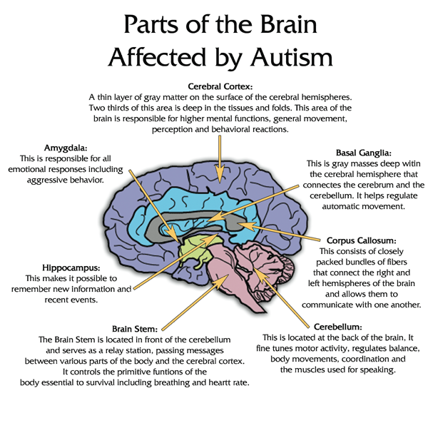 Stomach vs. Mind in Autism