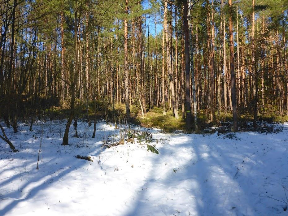 Лес, зима, трава, снег