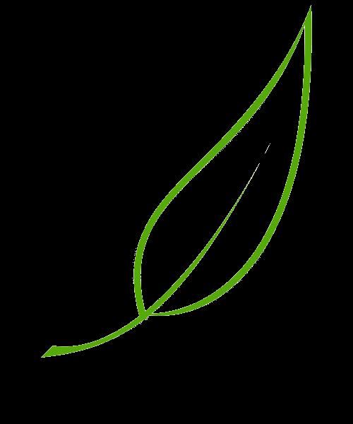 اوراق شجر بدون خلفيه للتصميم Shajara