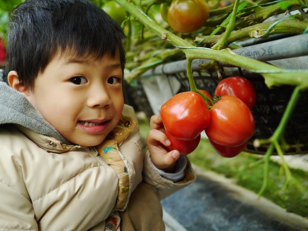自在.靜觀.Renee 樂活: 龍年初三~關西採蕃茄趣