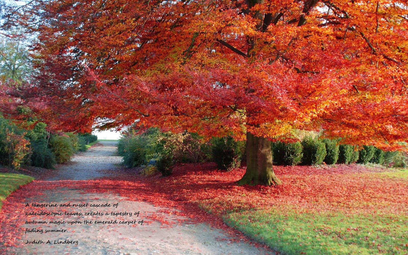 Fall Quotes: Pics And Random Stuff: Some Autumn Quotes