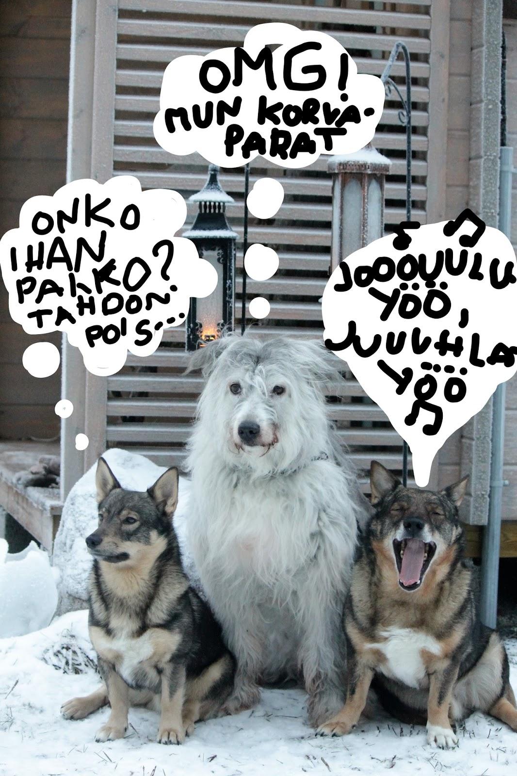 kielletty rento koiran tyyliin sisään huittinen