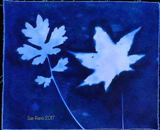 Wet cyanotype_Sue Reno_Image 223