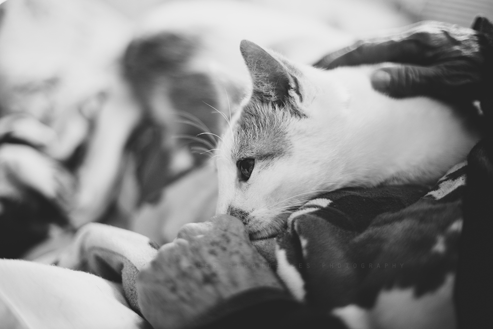 Photo Wanders: When A Cat Loves A Woman
