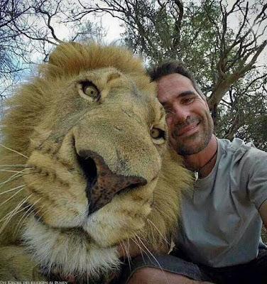 Lustiges gefährliches Selfie Foto mit Tieren - Mann neben Löwen