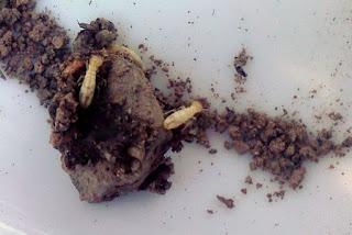 مكافحة النمل الابيض بالمنزل