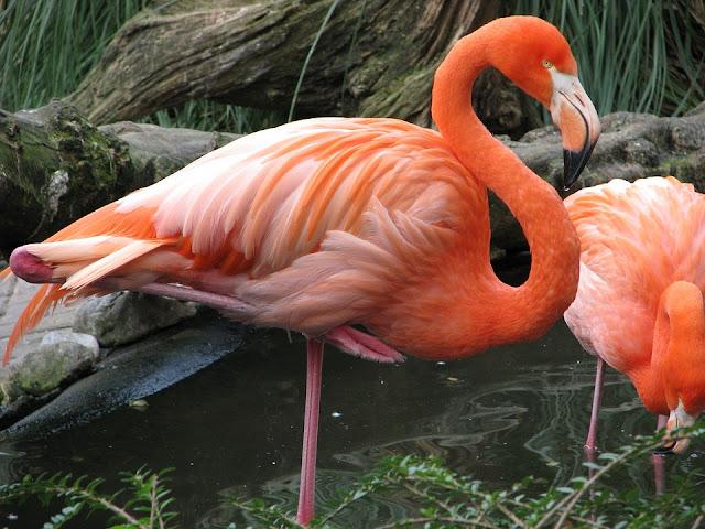 পৃথিবীর সবথেকে সুন্দর ও চমৎকার ১০টি পাখি | Top 10 Most Beautiful Birds in the World | Amazing Birds
