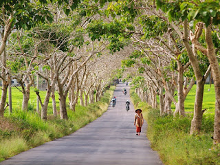 http://traveling-toindonesia.blogspot.co.id/2016/02/tourism-and-travel-in-jambi.html