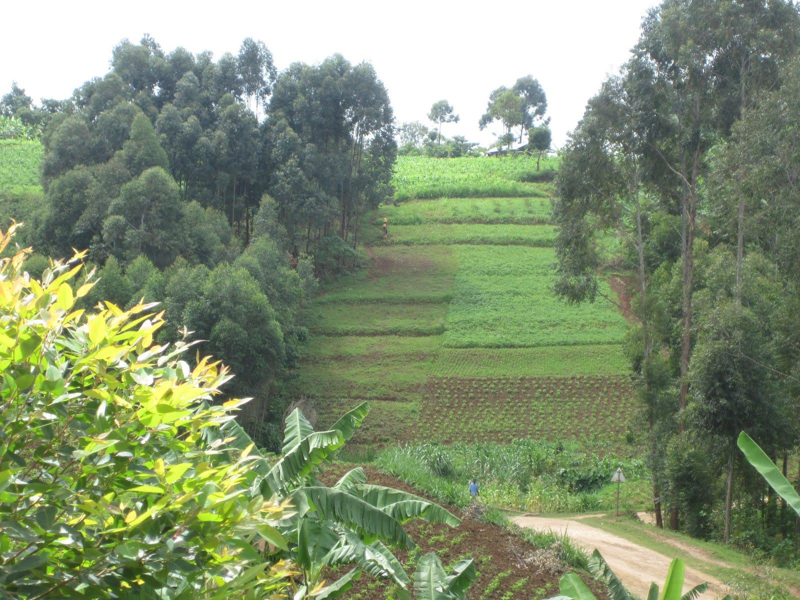 The Barlows in Uganda: Mbale, the Garden of Eden of Uganda