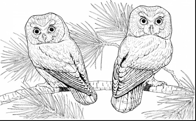 Fabulous Difficult Owl Coloring Pages With Hard Coloring Pages For Adults  And Extremely Hard Coloring Pages