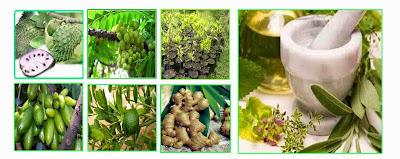 Rempah Obat Herbal Terbaik di Indonesia