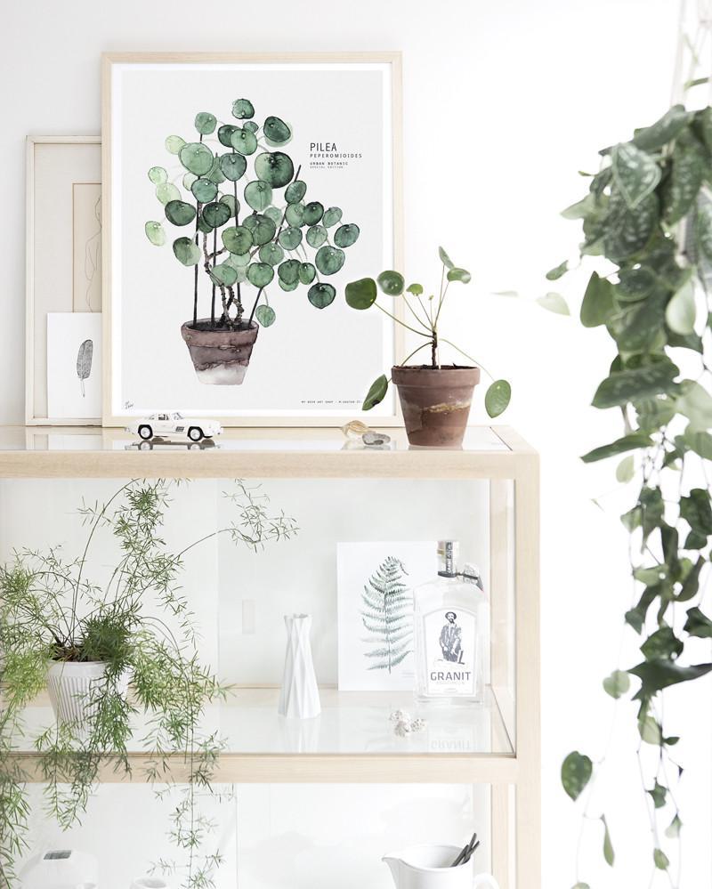 La nueva planta de moda : la pilea by Habitan2 | La pilea es la planta de moda en los ambientes de estilo nórdico