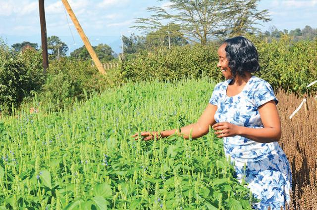 chia seeds farming in kenya