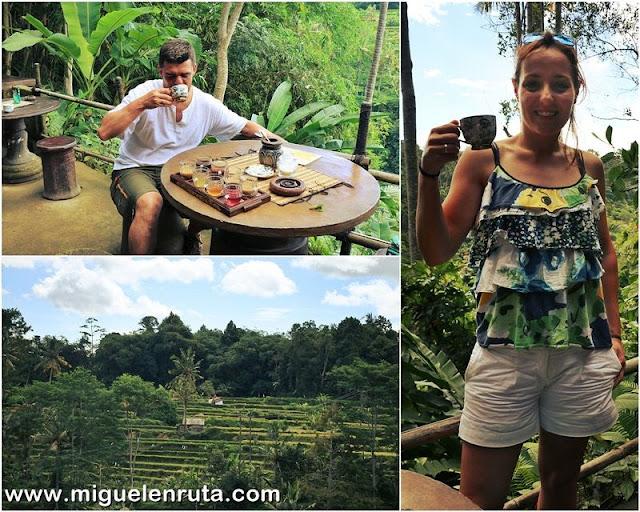 Probando-Kopi-Luwak-Bali
