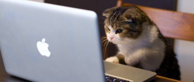 Mirar videos de gatos es muy bueno para la salud
