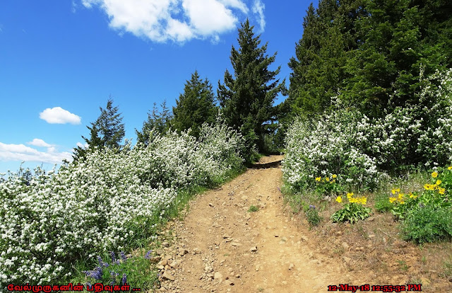 Oregon Wild Flowers Hike
