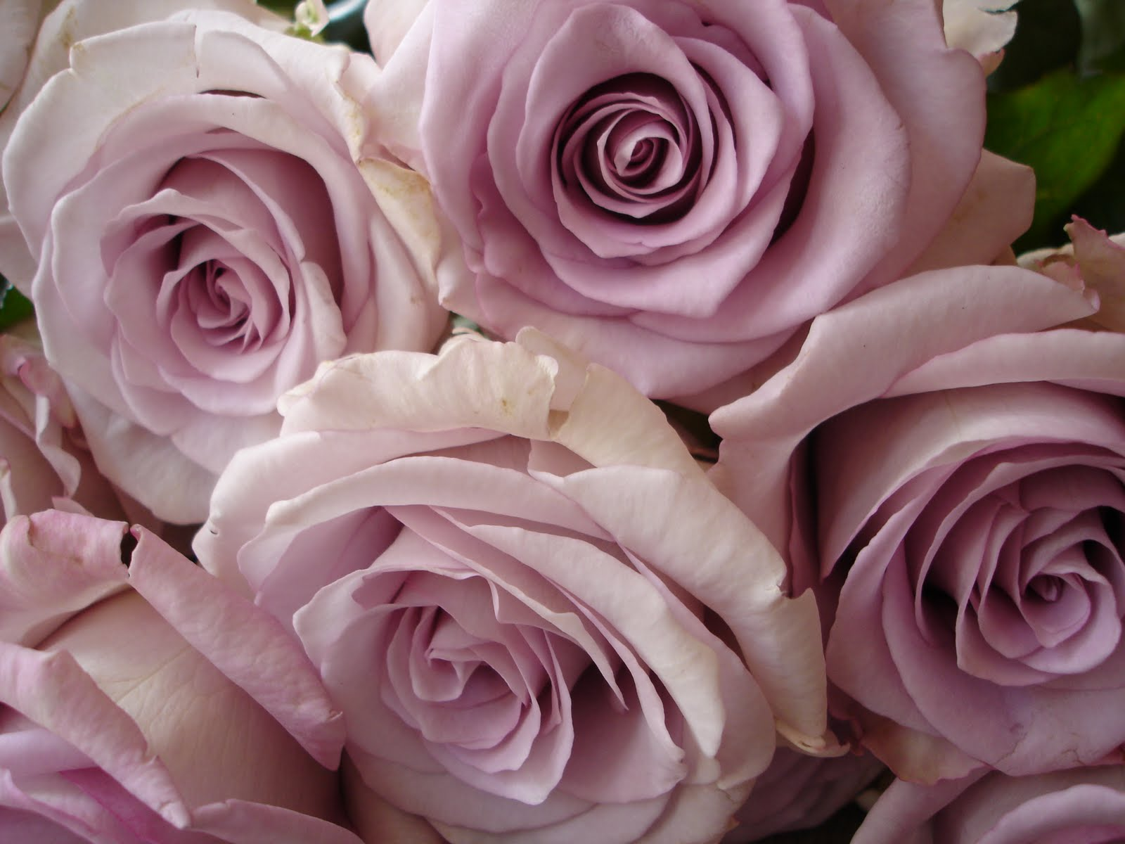 Which Dusky Roses For Your Vintage Wedding