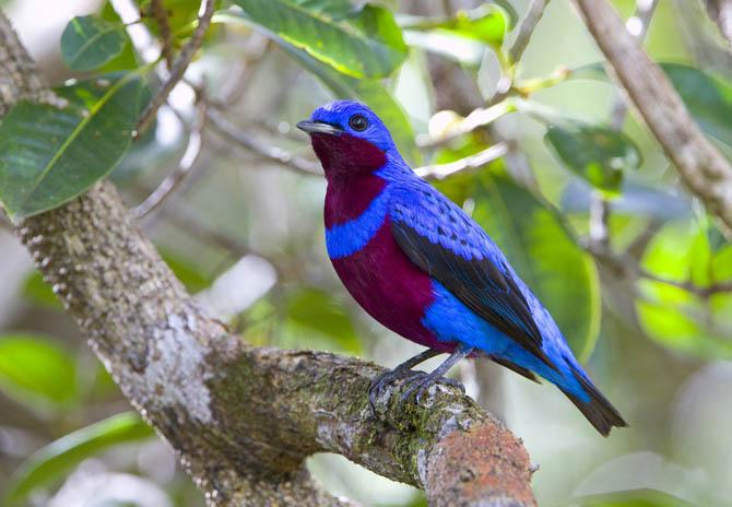 Excepcional Tudo Roch@ : Conheça algumas das aves mais belas do Brasil XZ07