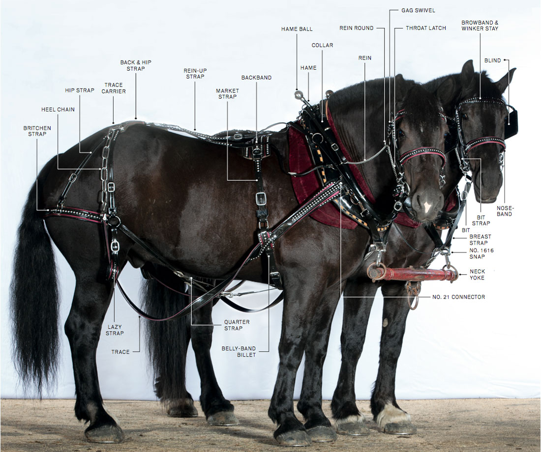 Two Horse Harness Diagram Automotive Wiring Work Tywkiwdbi Quot Tai Wiki Widbee Draft Gear Miniature Parts