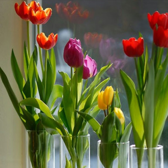 19 (dezenove) plantas que podem ser cultivadas em vaso com água em casa