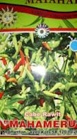 benih petani,tahan virus, buah lebat, matahari seed, Cabai Mahameru, tahan layu, tahan cekaman calcium