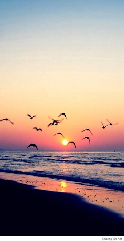 Beach Sunset Wallpaper Iphone 11