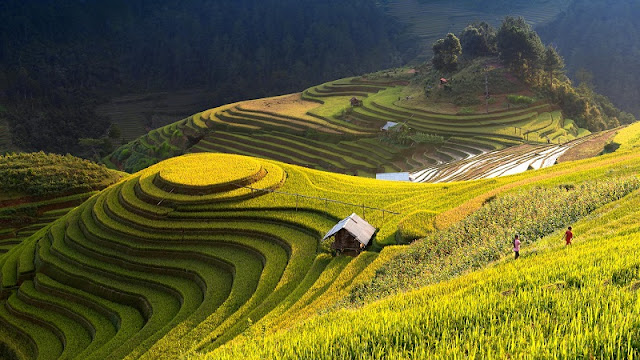 Taste The Famous Sticky Rice In Mu Cang Chai 1