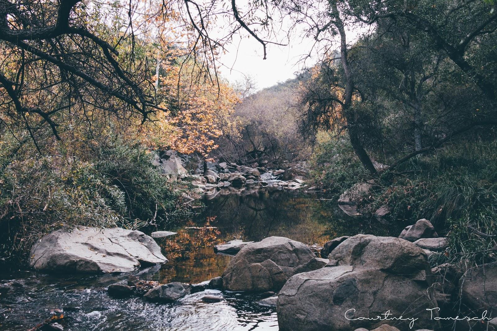Courtney Tomesch Elfin Forest Escondido California