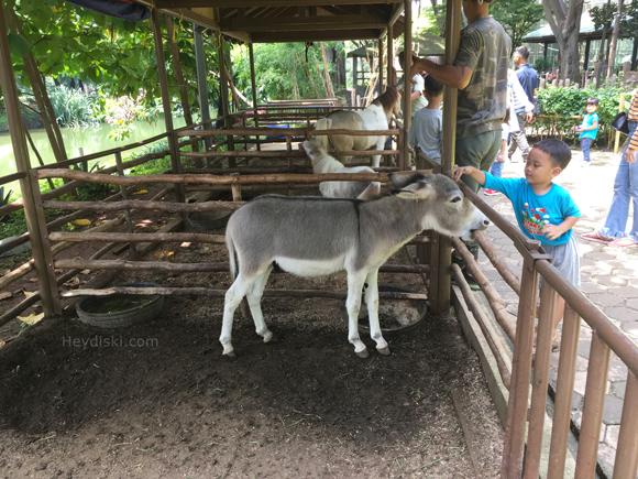 anak-keledai-ecopark-ancol