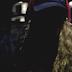 """$UICIDEBOY$ divulga clipe da faixa """"Face It""""; confira"""