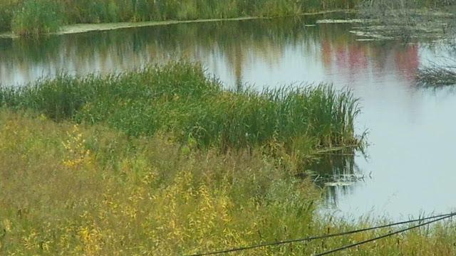 т идеи спортивного комплекса можно и не отказываться. Озеро облагородить, очистить, выкопать резервуар поглубже, запустить рыбу. Установить небольшие пирсы для рыбаков, желающих половить рыбу снабдить абонентскими билетами. По берегам посадить раскидистые Ивушки, в знойное лето под ними будут отдыхать и жители города, и посетители супермаркета ОКей. Спортивная рыбалка в микрорайоне промышленного города Тюмень это первый и единственный спортивный комплекс по России на приближающийся 2017 год. И экологическая флора озера с периодически бьющими из глубины ключами будет сохранена, и здоровье людей будет вне опасности, и бизнес от спорткомплекса на открытом свежем воздухе на природе и разработчику архитектору честь и слава.