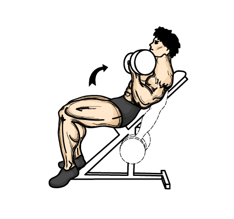 The Best Way To Gain Muscle | #1 Blog Information ...