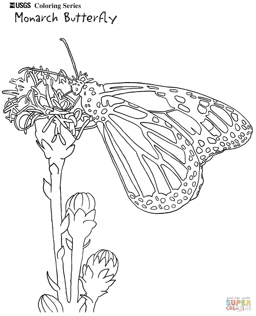 Best Monarch Butterfly Coloring Pages Images