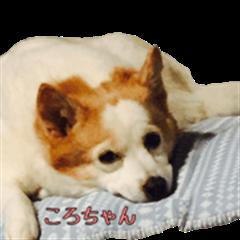 Colo is a Dog. Sticker.1