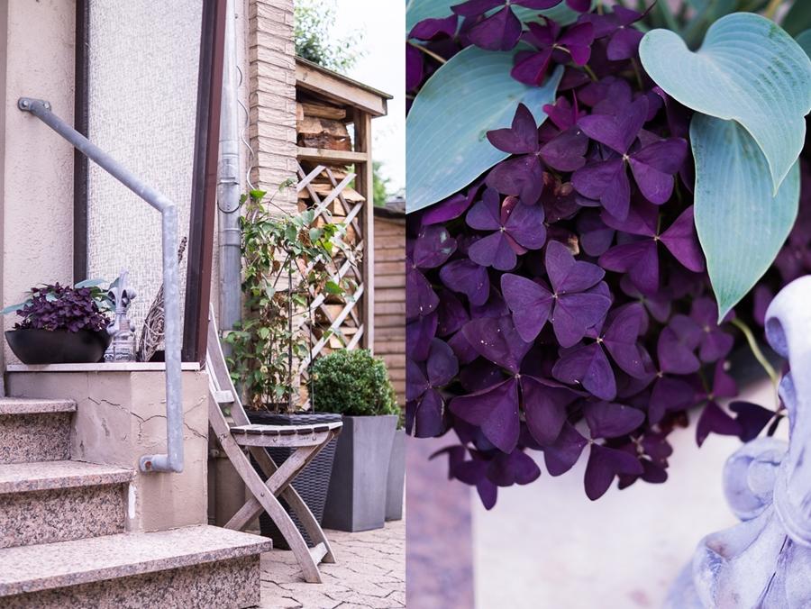 Blog + Fotografie by it's me! | fim.works | Bunt ist die Welt | Garten im Juni 2016 | roter Klee, Funkie Hostia | Buchsbäume und Clematis in Pflanzgefäßen