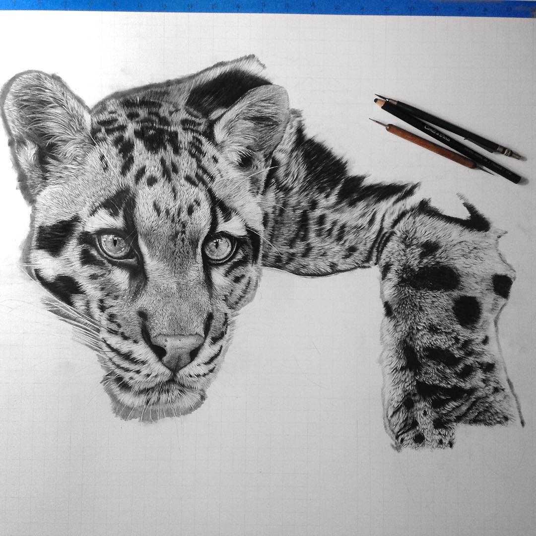 15-Cat-wip-Monica-Lee-zephyrxavier-Eclectic-Mixture-of-Pencil-Wild-Life-and-Portrait-Drawings-www-designstack-co